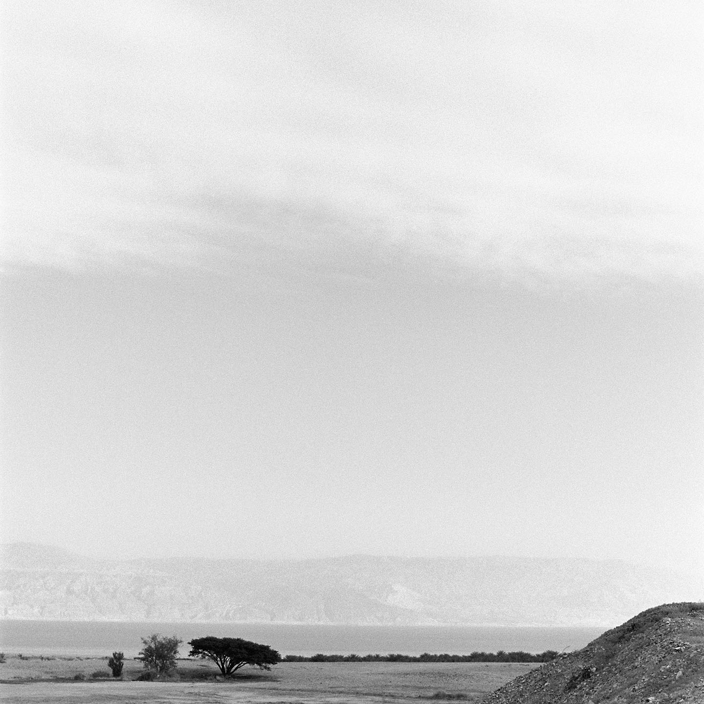 Landscape with 3 trees